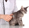 Ветеринарные клиники в Юрьев-Польском